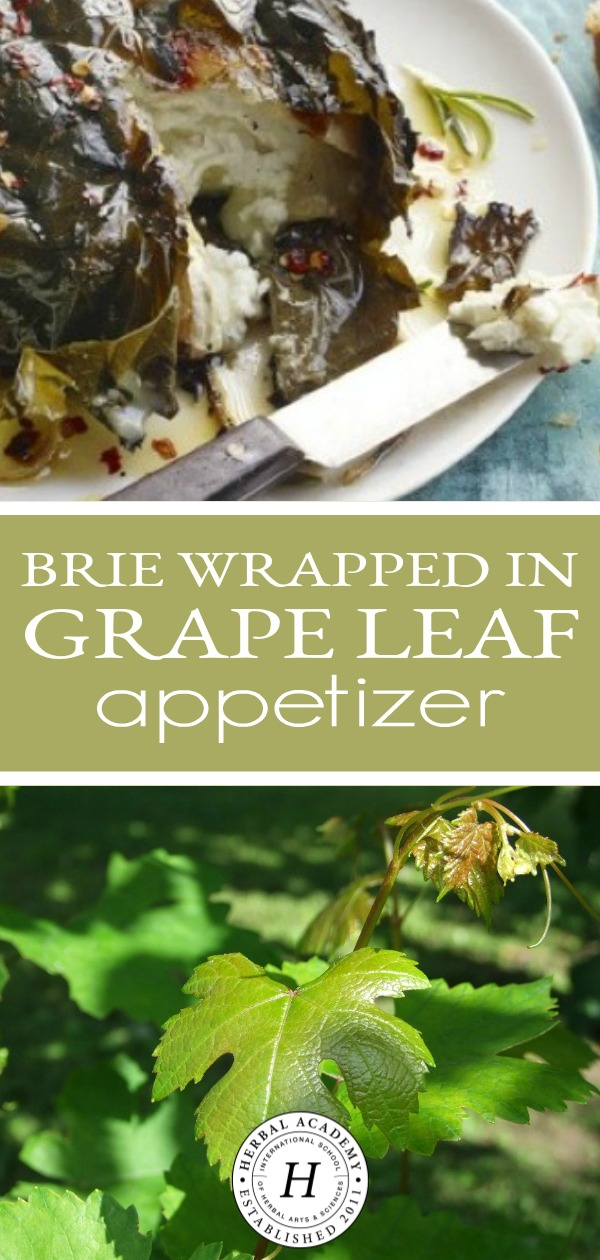 Brie Wrapped in Grape Leaf Appetizer | Herbal Academy | Enjoy this delicious, easy-to-make Brie and grape leaf appetizer recipe. This is perfect for simple get togethers or elaborate pitch in meals.