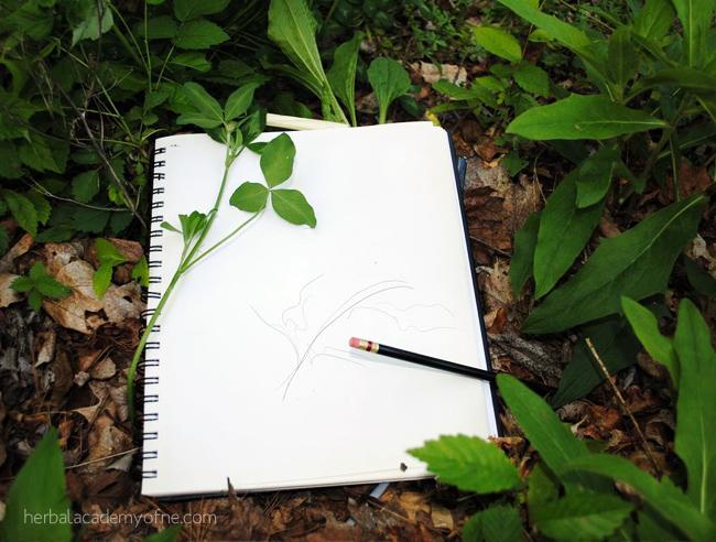 Plant Identification - Supplies