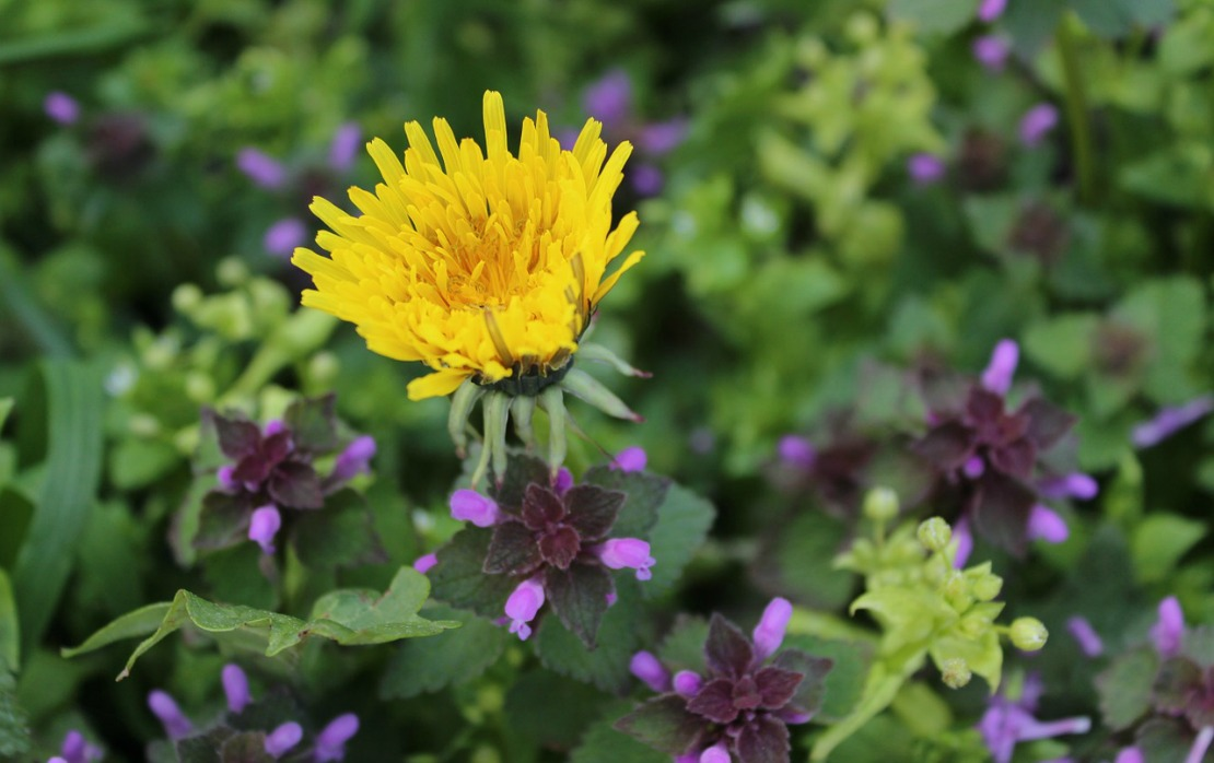 23 Divine List of Healing Herbs in the Bible