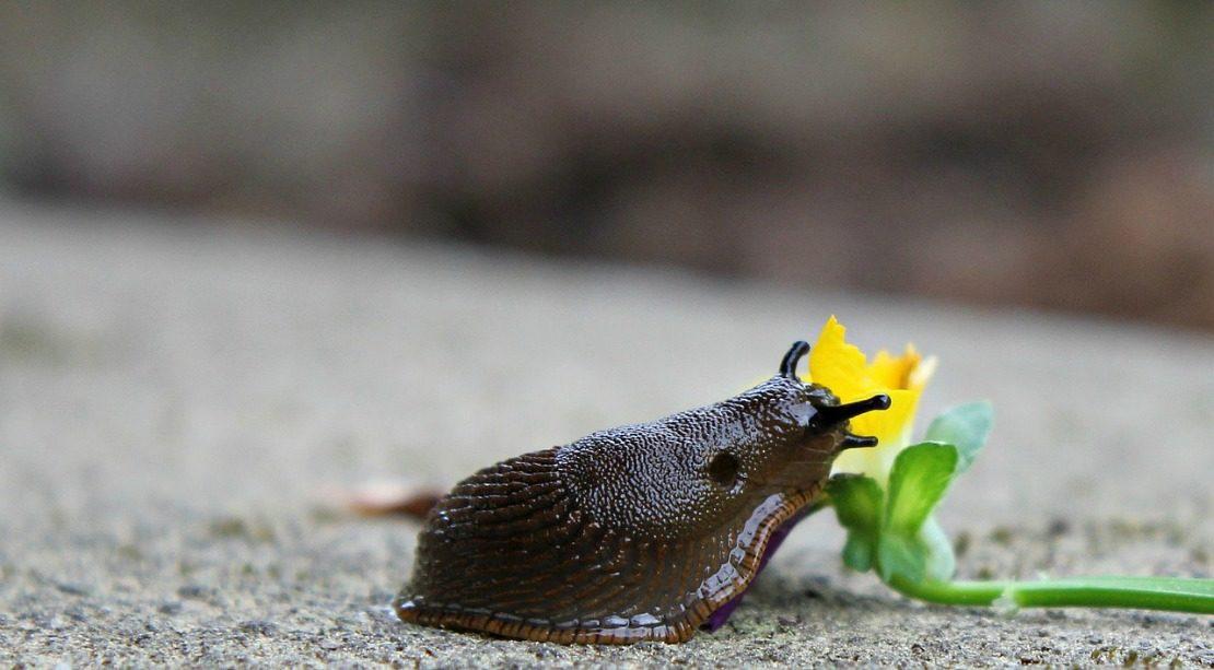 Deter Garden Bugs