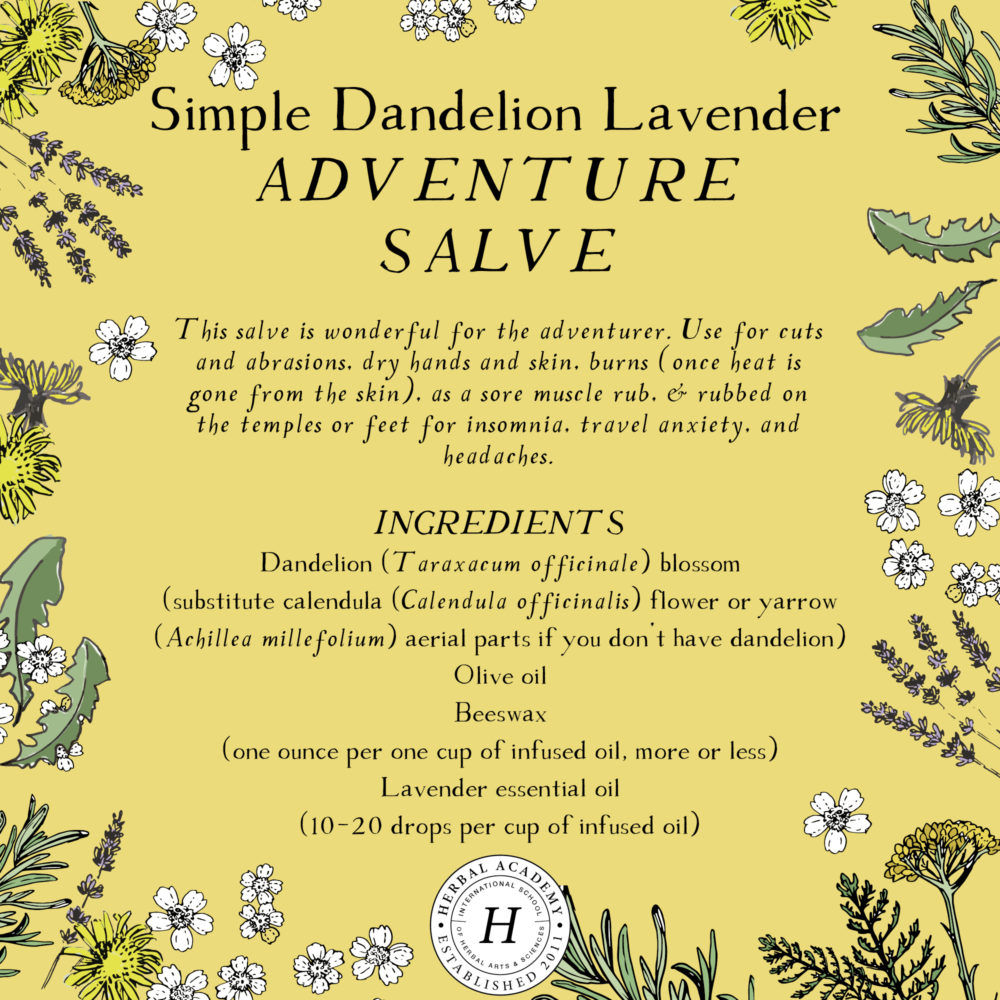 Dandelion: The Dandiest Weed of All | Herbal Academy | Visually dandelions may draw up childhood memories, but they offer many health benefits – from the flowers, to the leaves, and right down to the root.