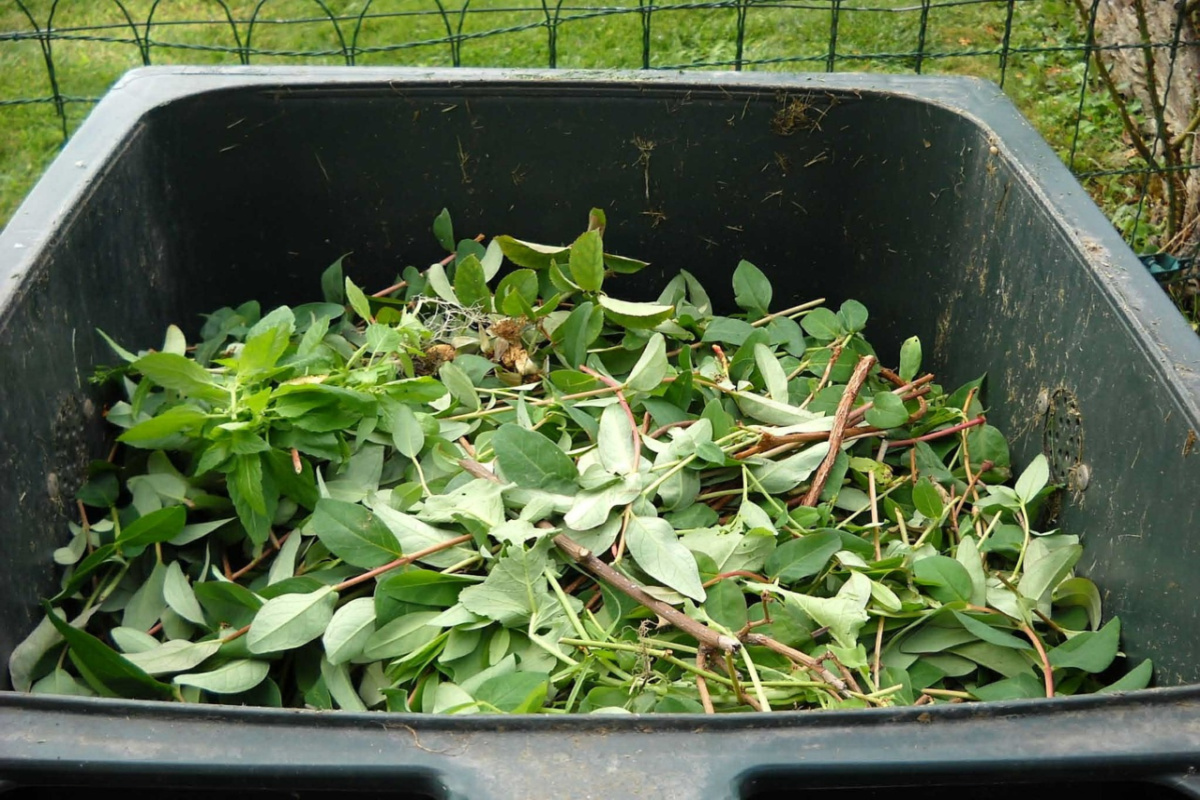 green leaves in a composting container