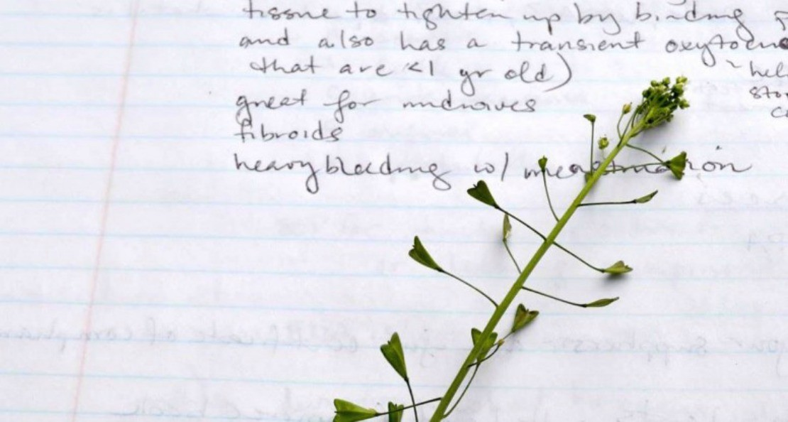 One Herb At A Time: 7 Ways To Inspire Your Herbal Studies   Herbal Academy   When you begin your herbal studies, the sheer number of herbs to learn can be intimidating. It's useful to learn herbs by studying them on herb at a time.
