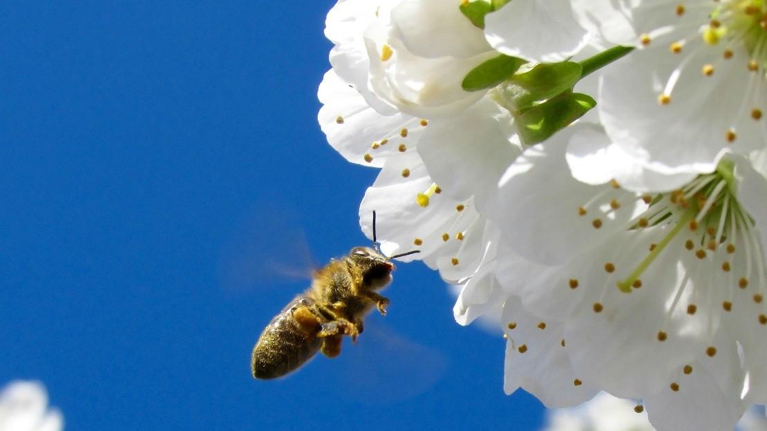 Inviting Bees