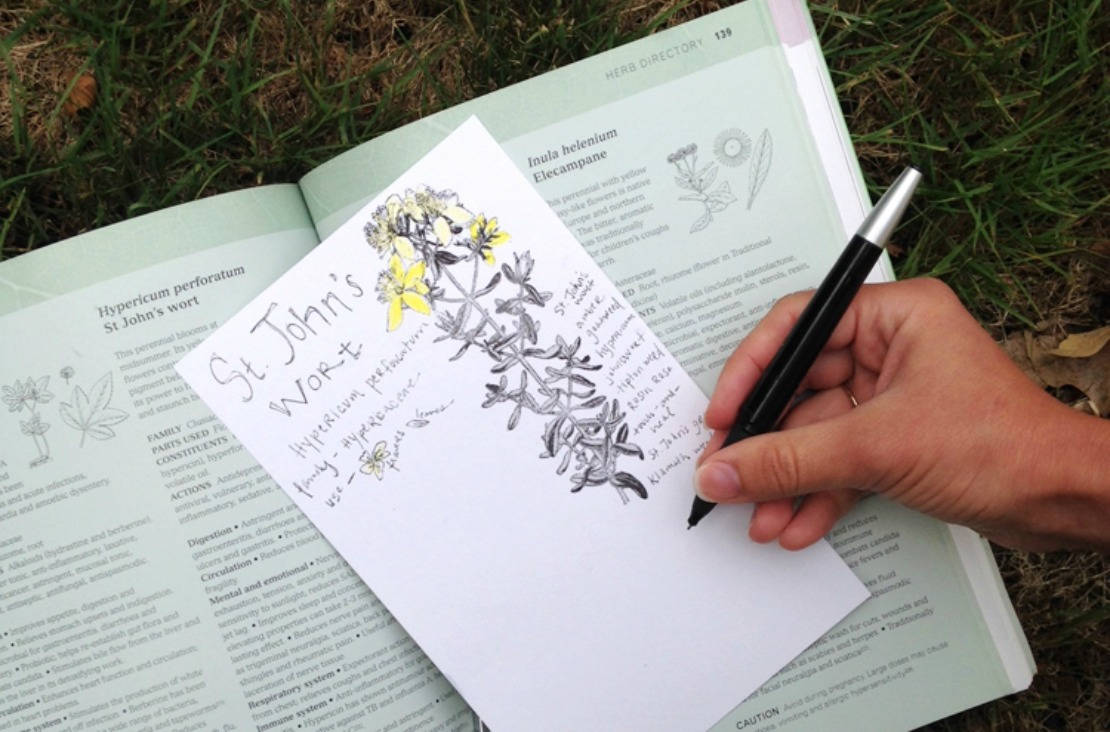 How To Create An Herbal Materia Medica (Free E-Course)   Herbal Academy   One part of learning to be an herbalist is learning about the herbs themselves. Our new Herbal Materia Medica Course can help make learning one herb at a time much easier. Check it out today!