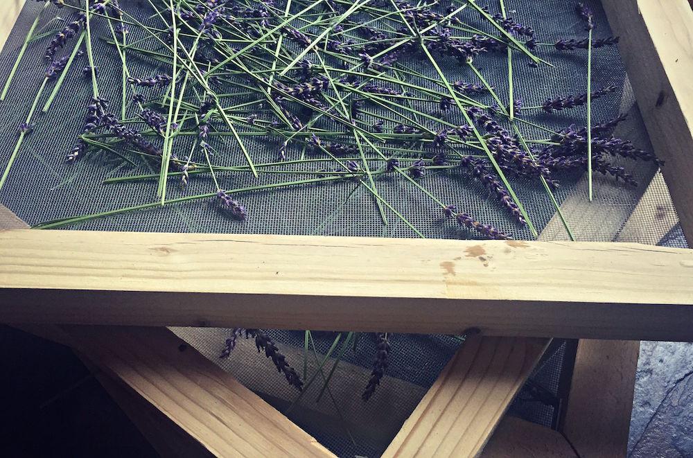 10-herb-screens-lavender-full