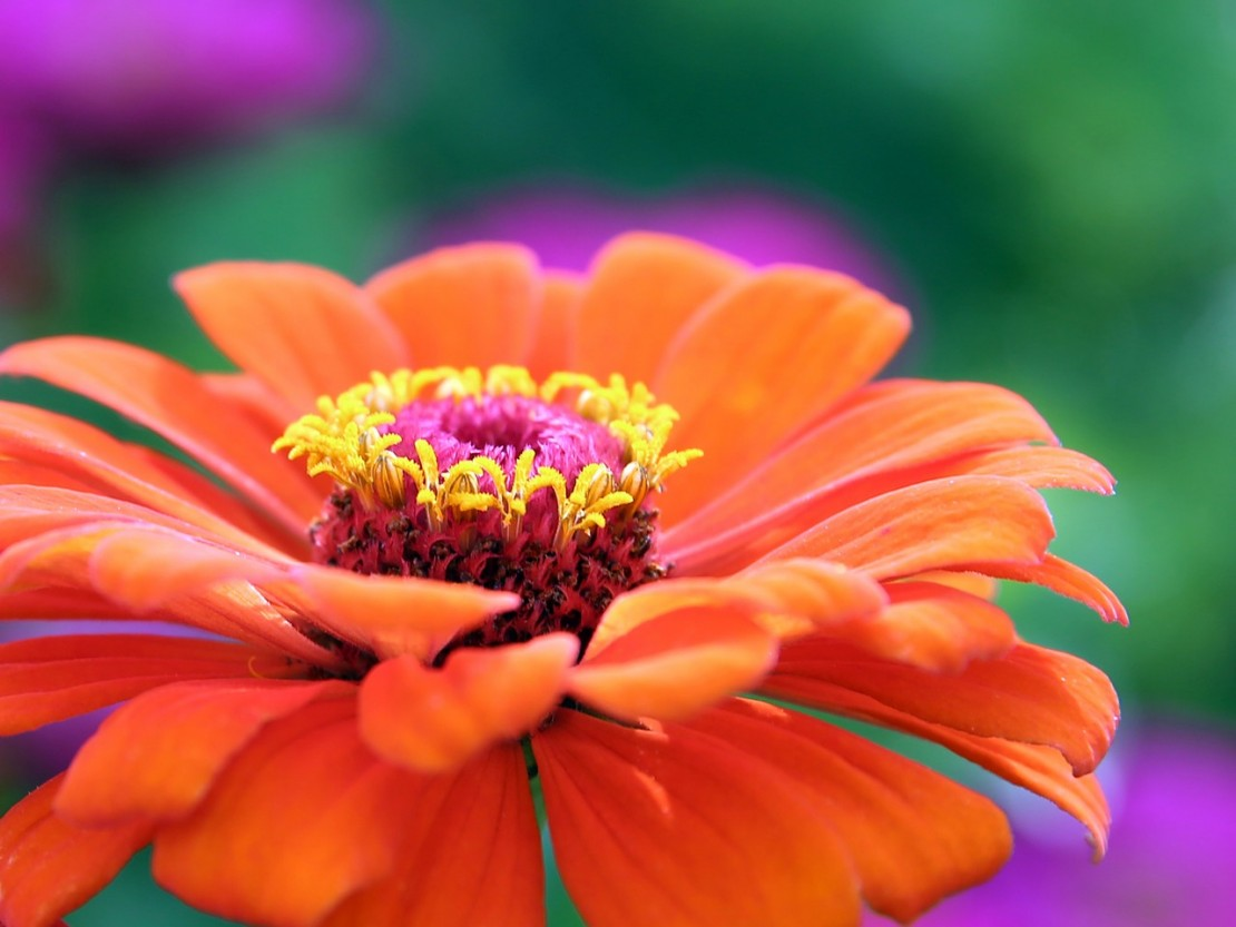 12 Best Botany Words to Use in Your Herbal Studies   Herbal Academy   It's handy to know a few of the more unusual botanical terms. These are the botany words you might come across when you are identifying a new plant.