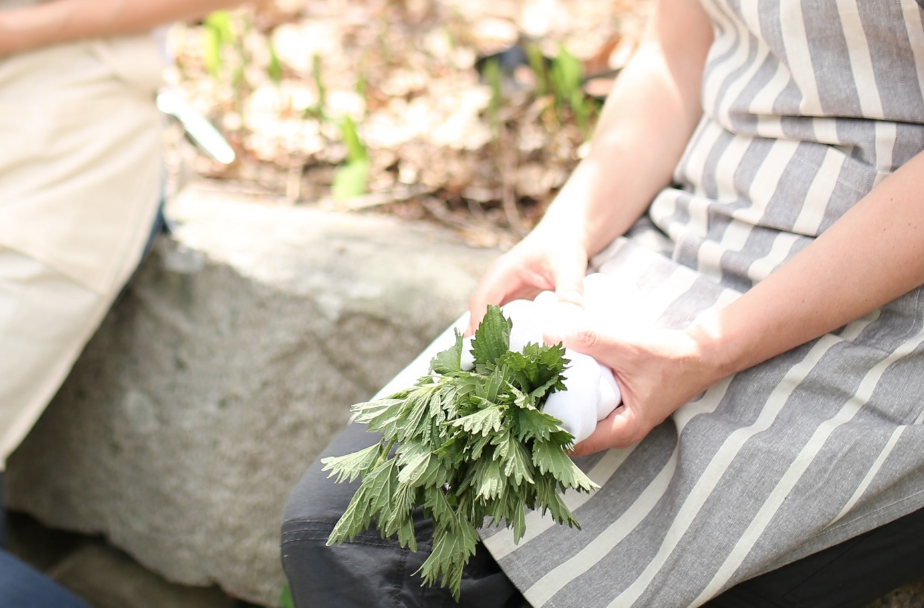 The Advanced Herbal Course at the Herbal Academy - Fall 2015
