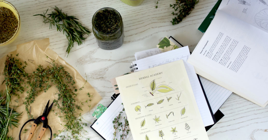 Summer: The Perfect Time To Work On Your Herbal Studies | Herbal Academy | Summer school is in session. Learn how you can grow your herbal knowledge in an easy, systematic way with summer herbal studies.
