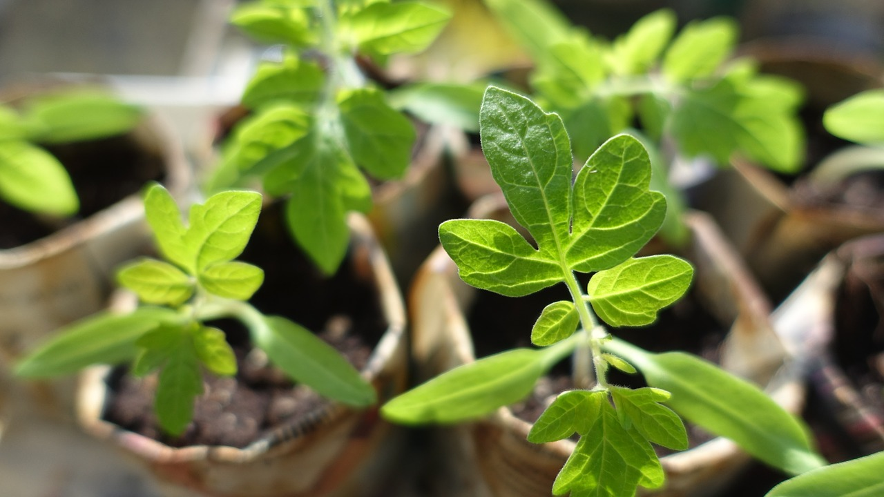 6 Ways To Fertilize Your Garden With Herbs | The Herbal Academy | Herbs can add healthy nutrition to any garden. Learn how to use them as a fertilizer.