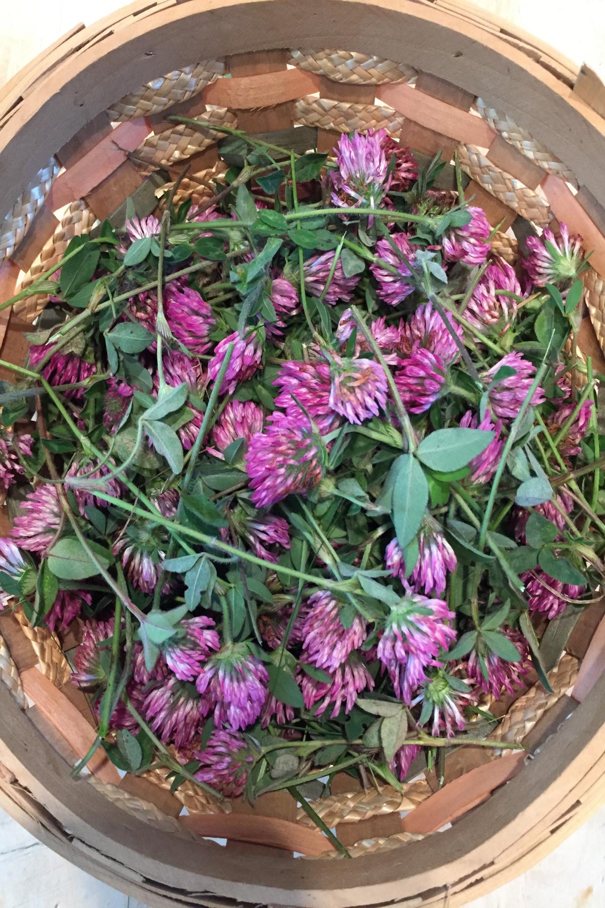 basket of red clover