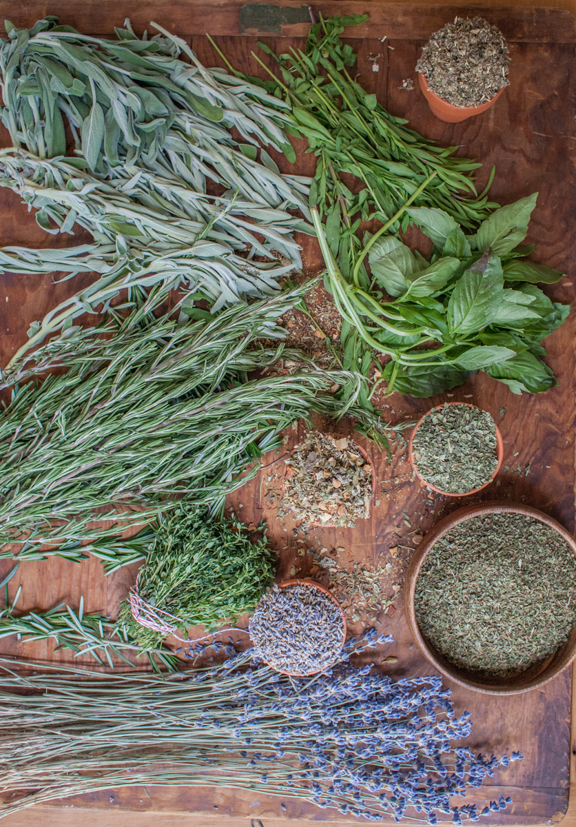 How To Dry Fresh Herbs Using A Dehydrator | Herbal Academy | Preserve your summer harvest. Learn how to dry fresh herbs using a dehydrator to preserve the aroma, flavor, and medicinal qualities of the herbs.
