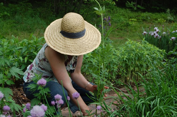 Teacher Feature: Maria Groves | Herbal Academy | Learn how herbalist Maria Groves practices herbalism, makes a living, and who her herb mentors are.