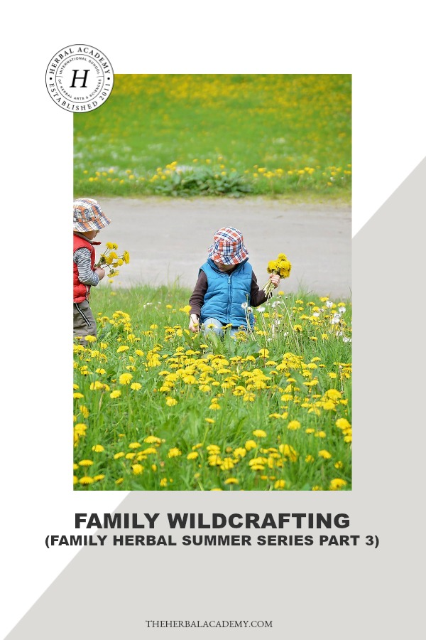 Family Wildcrafting (Family Herbal Summer Series: Part 3) | Herbal Academy | Join us on an herbal adventure as we discover the joys of family wildcrafting! Explore herbs, study what you find, and put them to use in your life!