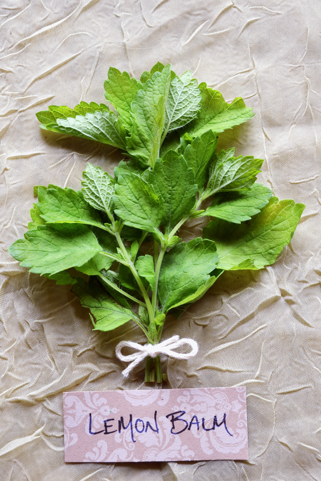 Lemon Balm: The Immortal Life of Bees | Herbal Academy | Enjoy this history of lemon balm and its many uses throughout the years.