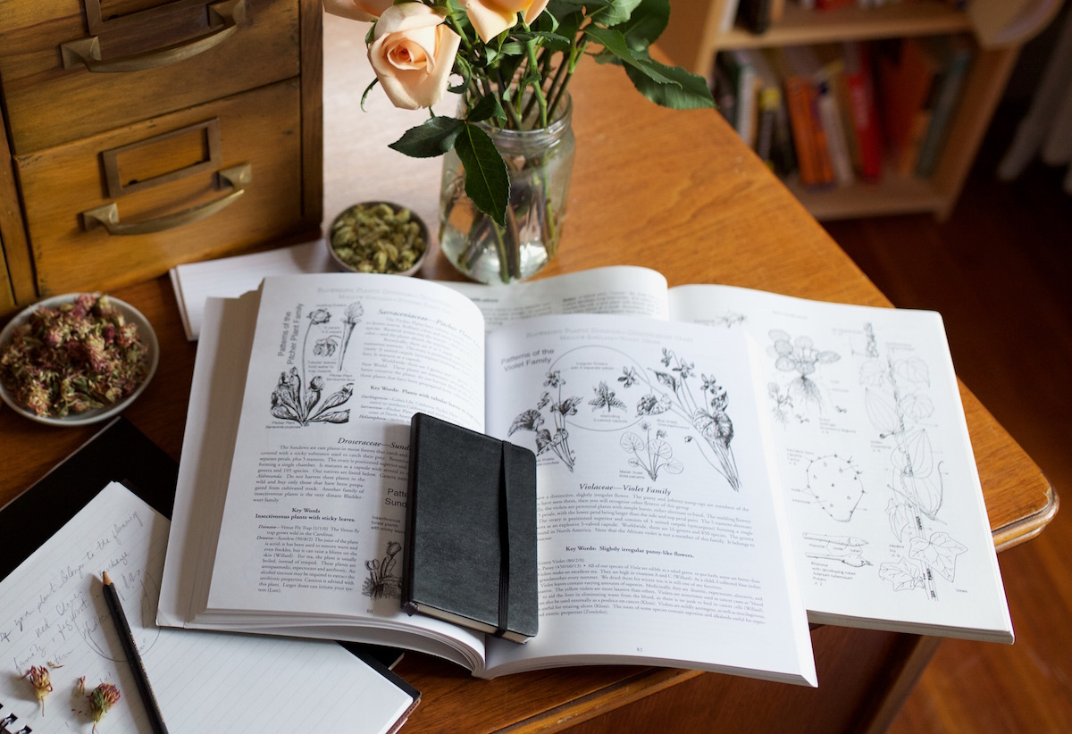 Summer: The Perfect Time To Work On Your Herbal Studies | Herbal Academy | Summer school is in session. Learn how you can grow your herbal knowledge in an easy way over the summer.
