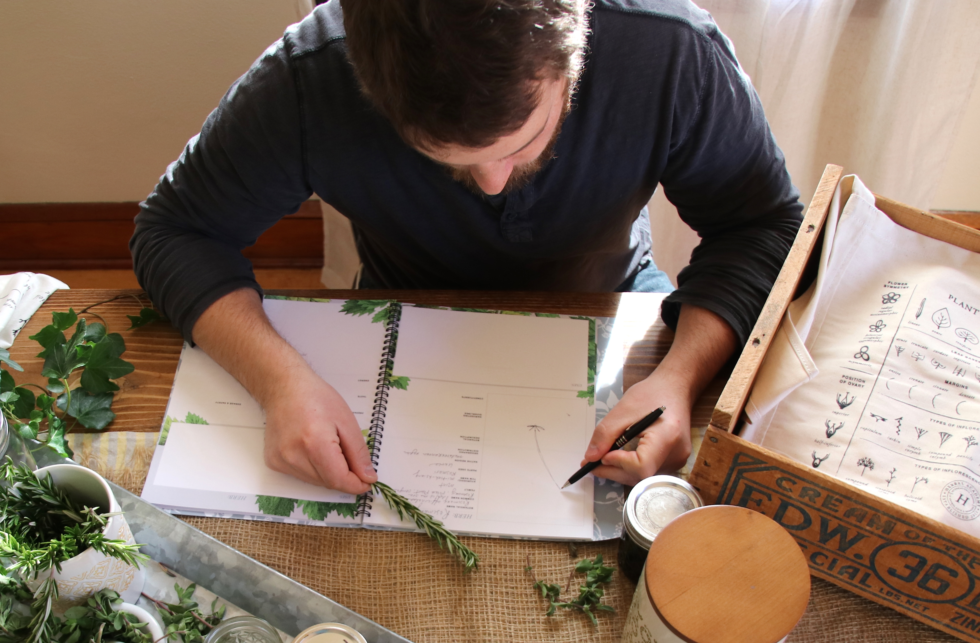 Our Materia Medica Short Course Is Back! | Herbal Academy | Our Materia Medica Short Course is back for a limited time. Learn more about it and how it can help advance your herbal studies today!