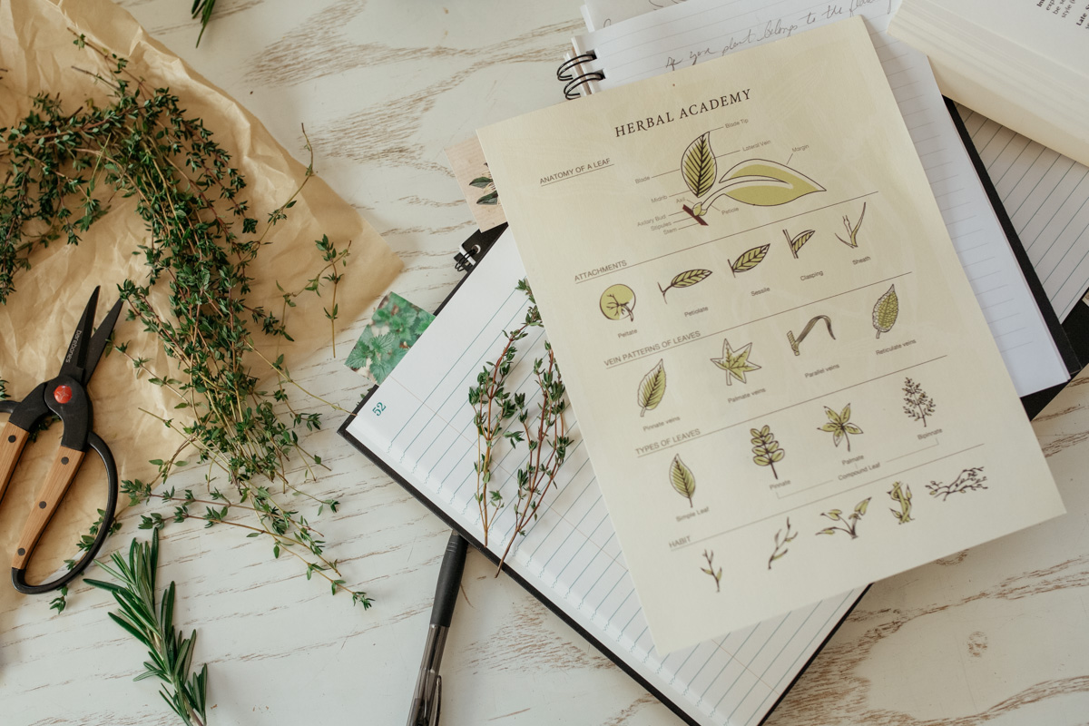 Herbal Academy Herbal Materia Medica Course - studying one herb at a time