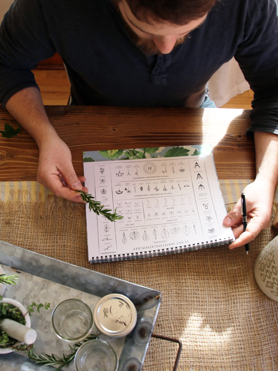 The Materia Medica Journal - a journal for herbalists