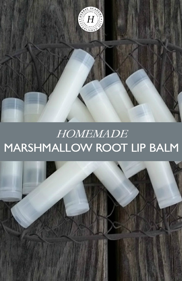 Homemade Marshmallow Root Lip Balm | Herbal Academy | Keep your lips soothed, healed, and moisturized all year long with this homemade marshmallow root lip balm that uses just a few simple ingredients!