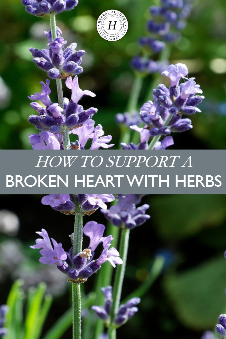 How To Support A Broken Heart With Herbs   Herbal Academy   Support a broken heart with these herbs that calm, uplift, and nourish the body!