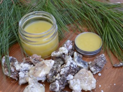 How To Make Pine Resin Salve   Herbal Academy   Did you know pine resin has been used historically for topical wound care? Learn how to make pine resin salve for your first aid kit!