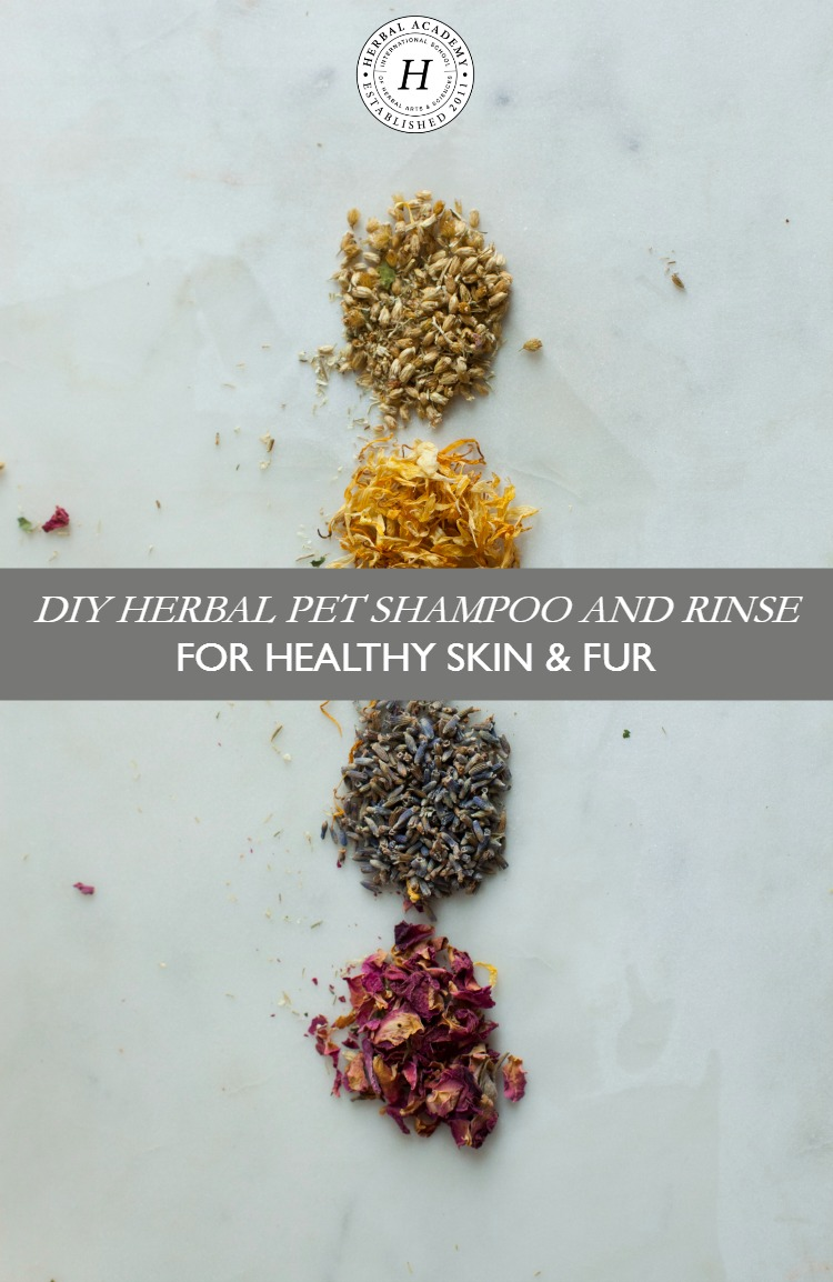 DIY Herbal Pet Shampoo and Rinse for Healthy Skin & Fur   Herbal Academy   To help keep your furry friends clean and healthy, here's a simple herbal pet shampoo and rinse to help maintain a healthy coat!