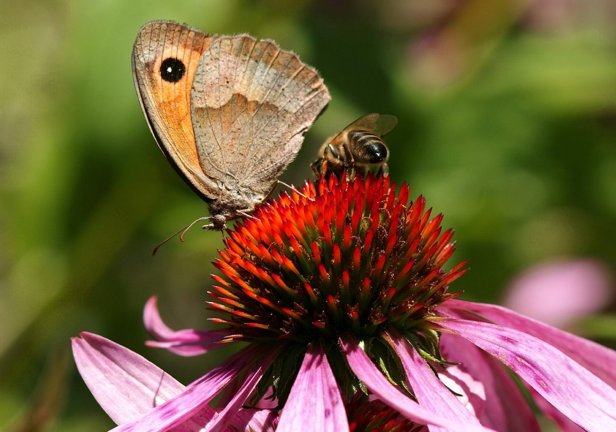Pollinator Gardens 101 | Herbal Academy | Learn the importance of pollinators and how you can help them by planting pollinator gardens around your home and in your community!