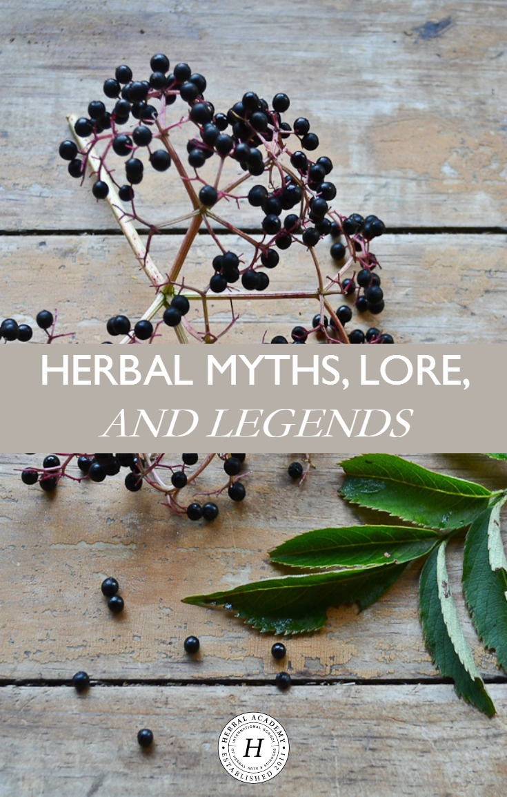 Herbal Myths, Lore, and Legends   Herbal Academy   Here's an introduction to some of our favorite herbal myths, lore, and legends. Learn the legends of 7 herbs from cultures around the world!