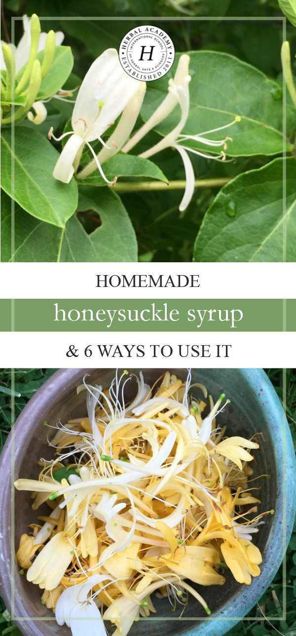 Homemade Honeysuckle Syrup & 6 Ways To Use It | Herbal Academy | Homemade honeysuckle syrup with its light, sweet flavor, is so easy to make! Here's a simple recipe to get you started!