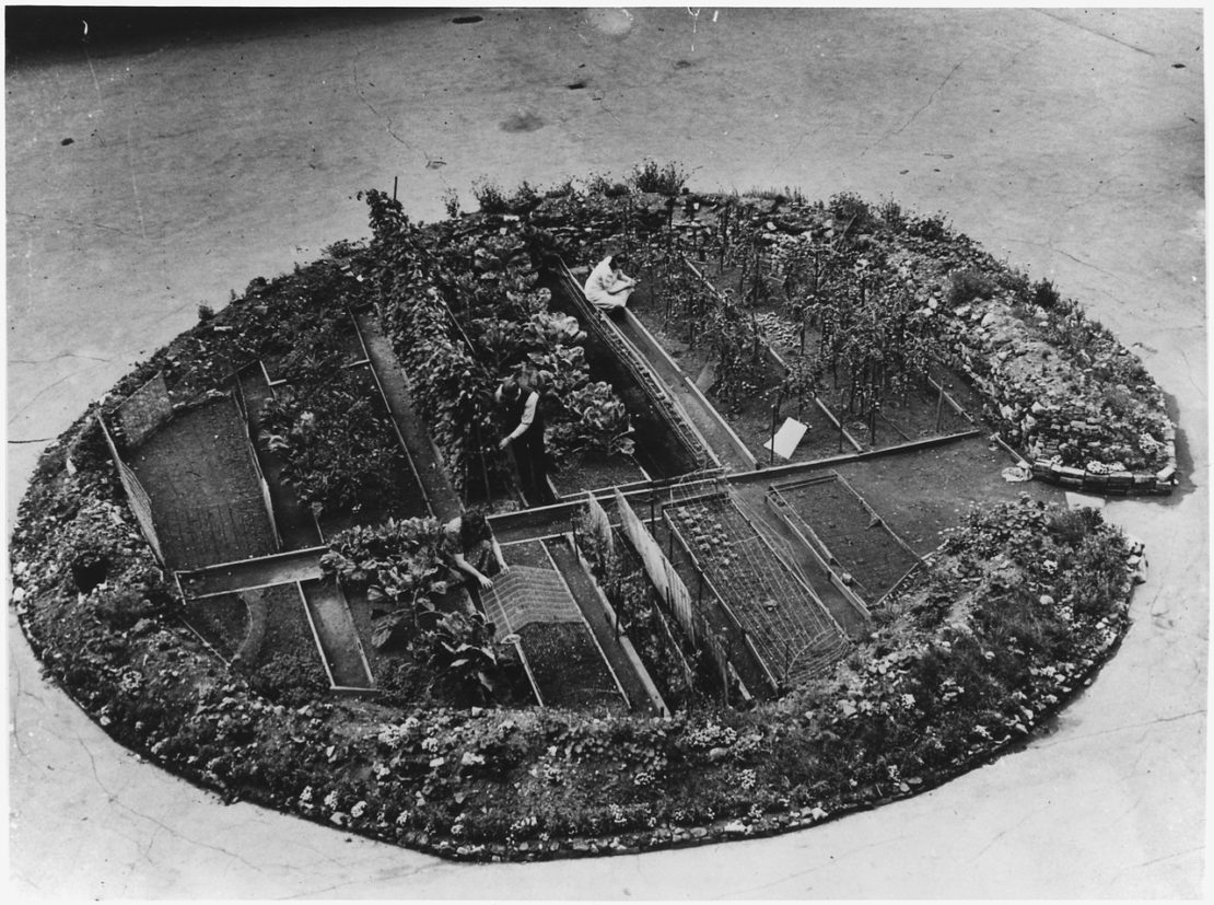 The Interesting Story Behind Victory Gardens | Herbal Academy | Do you know the history of community gardening dates back to World War I? Learn about historical and modern day victory gardens in today's post!