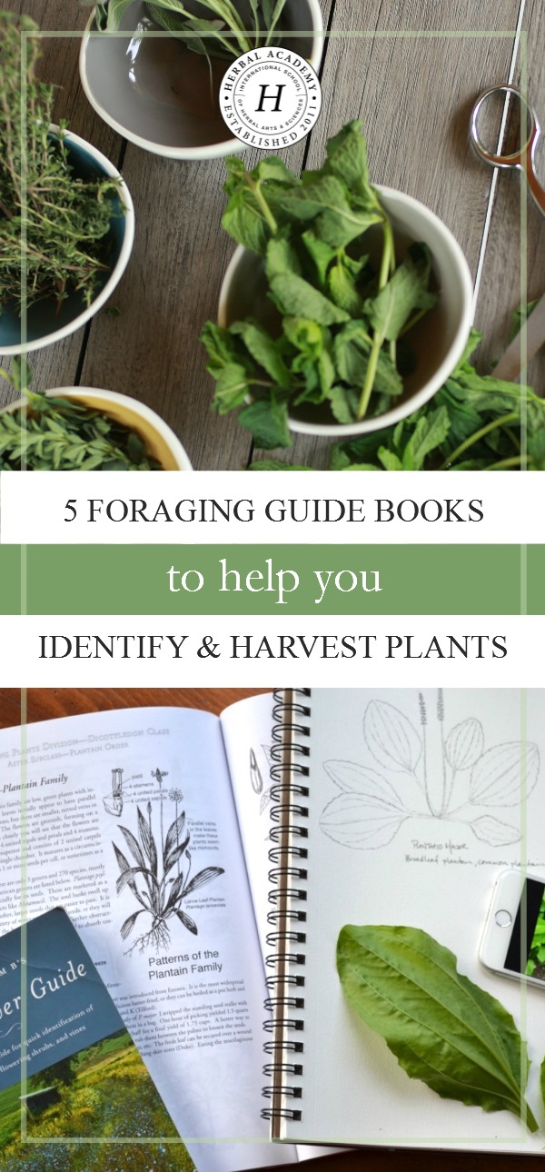 5 Foraging Guide Books To Help You Identify & Harvest Plants | Herbal Academy | Would you like to know more about identifying and harvesting plants? Here are 5 foraging guide books to get you started on your journey!