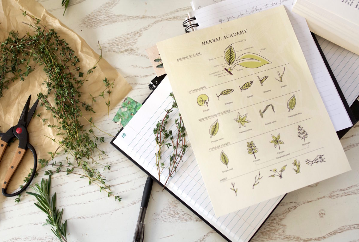 Anatomy of a leaf - Herbal Materia Medica Course by Herbal Academy