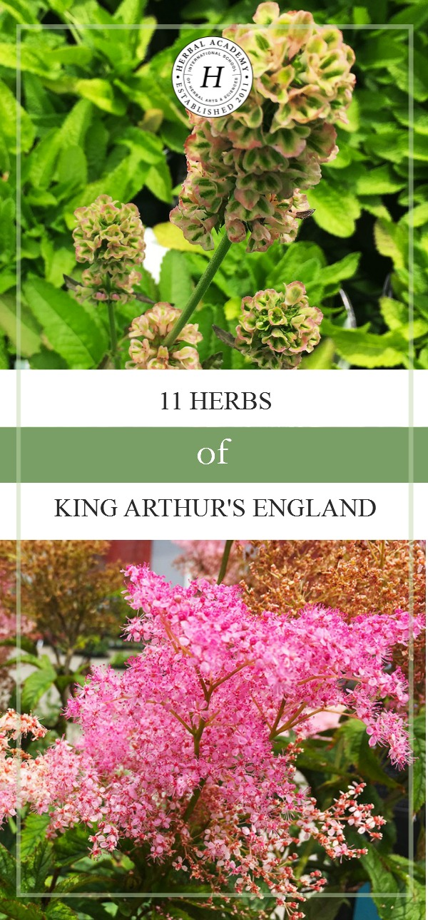 11 Herbs of King Arthur's England | Herbal Academy | Do you know herbs were used everyday during the time of King Arthur? Here are 11 Arthurian herbs still found today in the garden of Glastonbury, England!