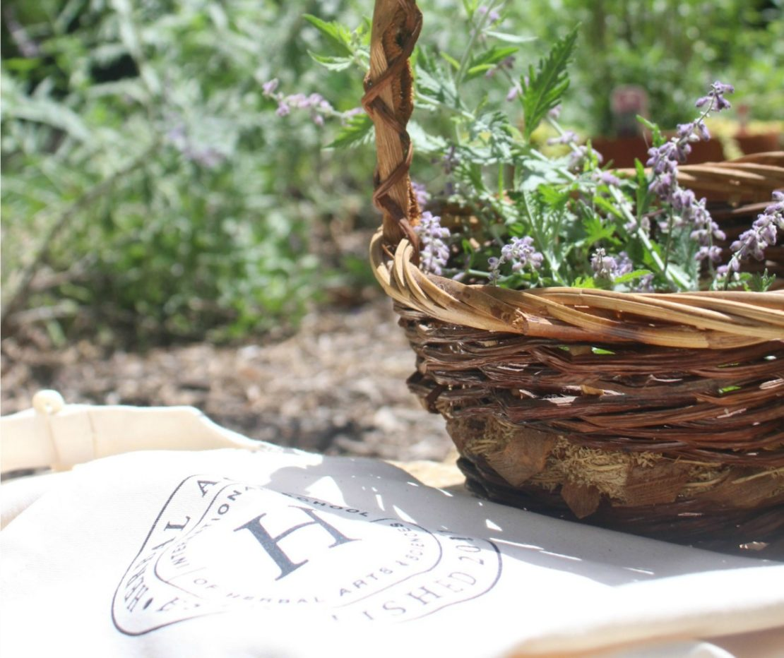 Herbal Q&A: 5 Herbal Academy Team Members Share Their Herbal Advice   Herbal Academy  Have you ever wanted to sit down with a group of herbalists and pick their brains? Today we have Herbal Academy team members sharing herbal advice with