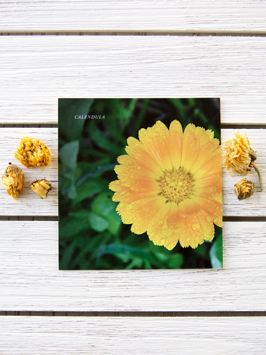 Mini Plant Monograph Cards - Herbal Academy Goods Shop