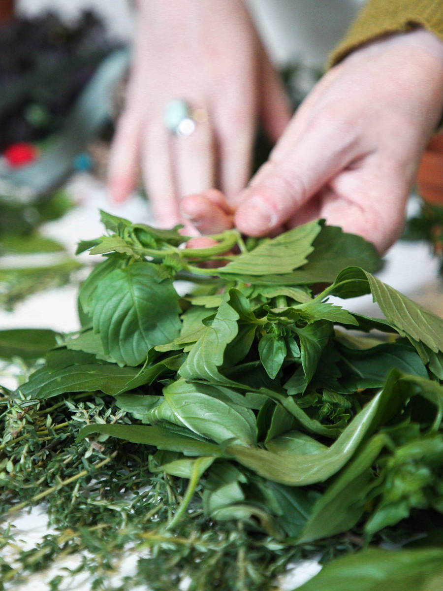 Botany and Wildcrafting Course – plant identification