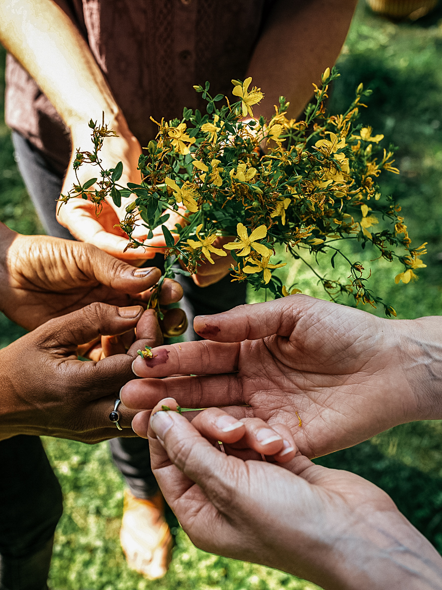 Becoming an Herbalist with the Herbal Academy