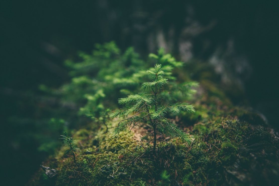 FairWild Week: Go Wild for Wild Plants | Herbal Academy | Learn how you can stand up for wild plants to ensure they're around for years to come!