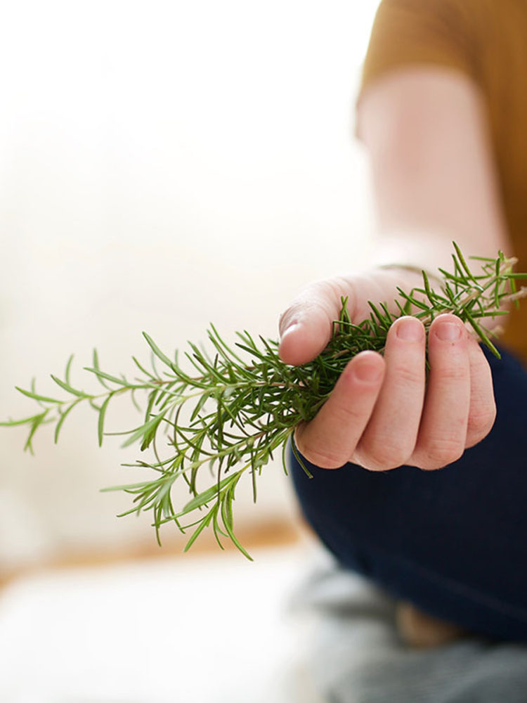 Herbs for ADHD Intensive Short course by Herbal Academy