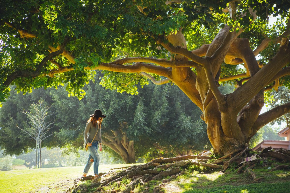 10 Simple Vitalist Practices To Support Well-Being   Herbal Academy   The main tenant of Vitalist herbalism is to remove obstacles to wellness. Here are 10 simple Vitalist practices that can positively impact one's well-being.