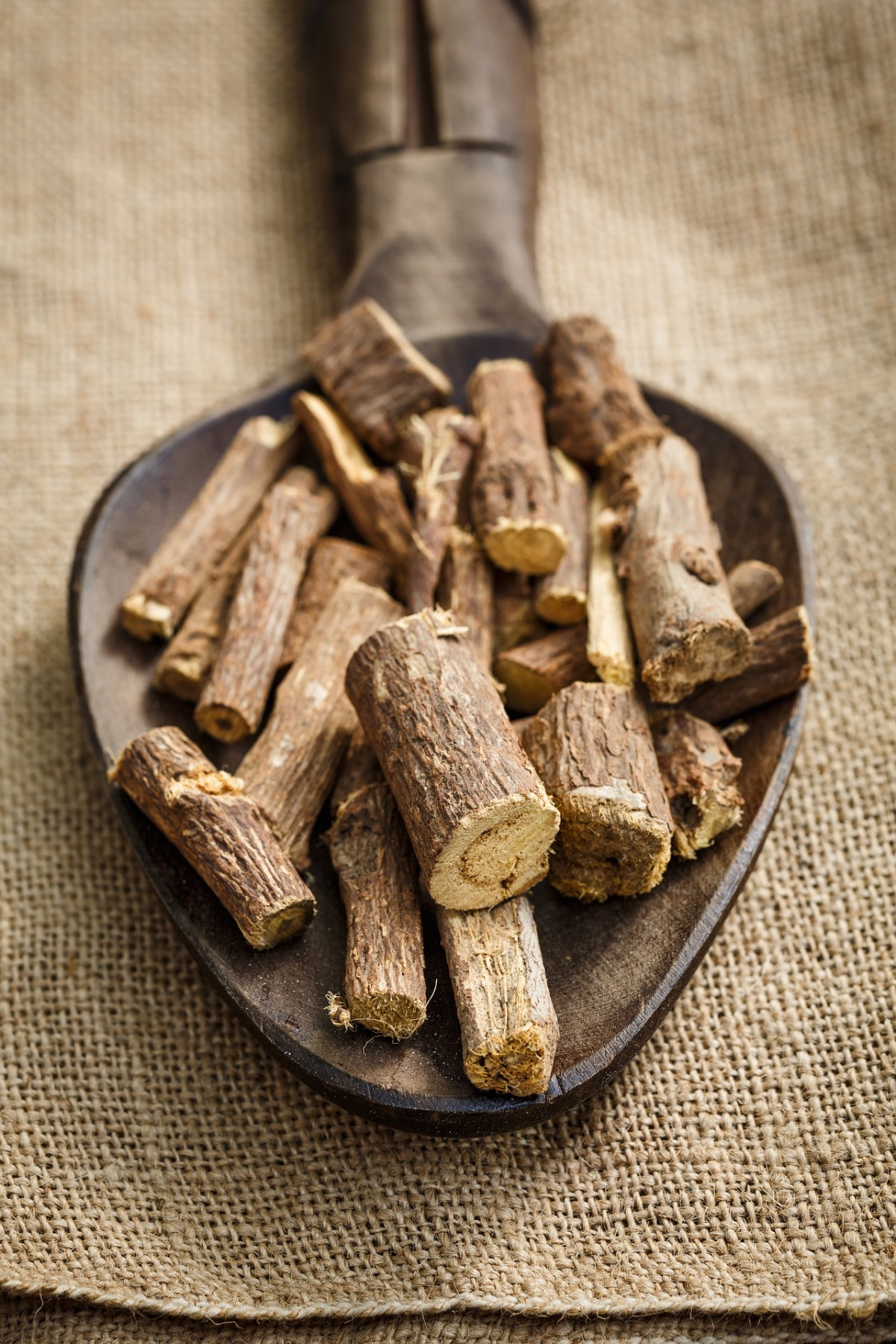 Herbal Roots 101: How to Prepare and Use Roots for Wellness | Herbal Academy | Use herbal roots for wellness! In this post, you'll learn when to harvest roots, how to prepare them for use, and you'll even find several recipes to try.