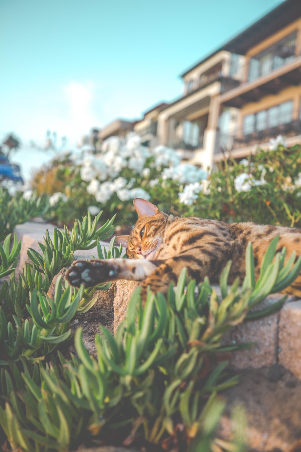The Best and Worst Plants for Pets | Herbal Academy | While there are many plants that are safe for domestic animals, there is also a list of plants that are toxic. Here's the best and worst plants for pets.