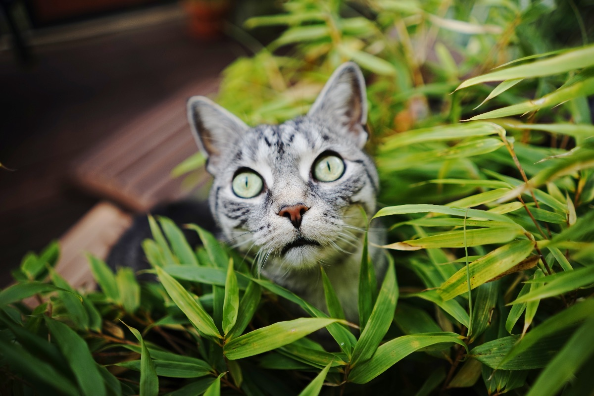 The Best and Worst Plants for Pets – Herbal Academy