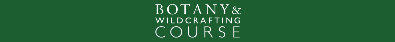 BOTANY AND WILDCRAFTING COURSE - learn how to forage