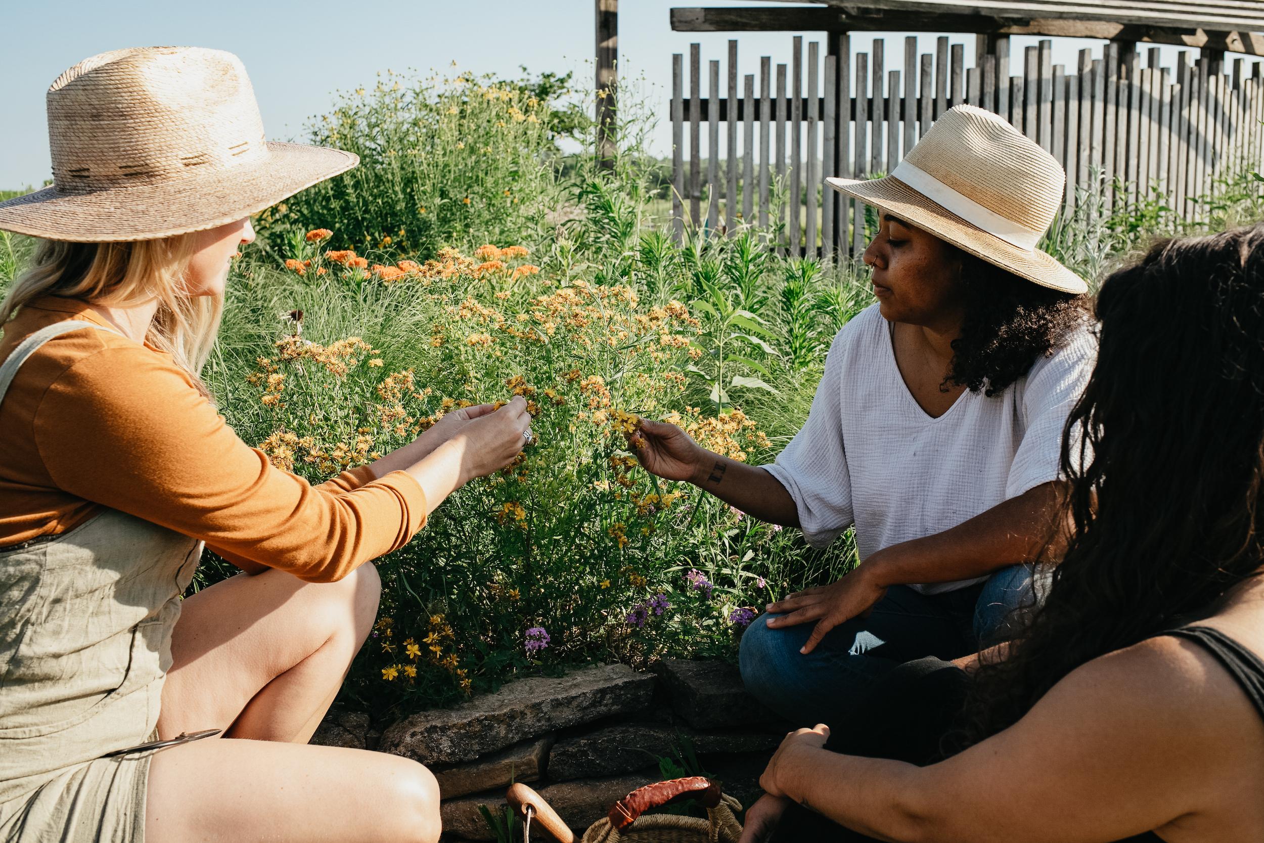 Community Herbalism - Teaching as an Herbalist