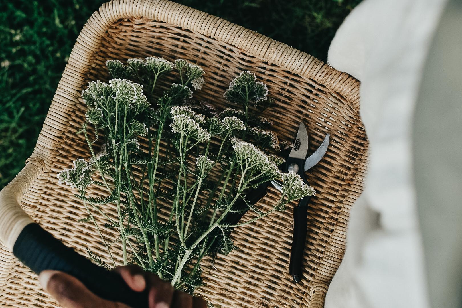 Professional Herbalist Path Package
