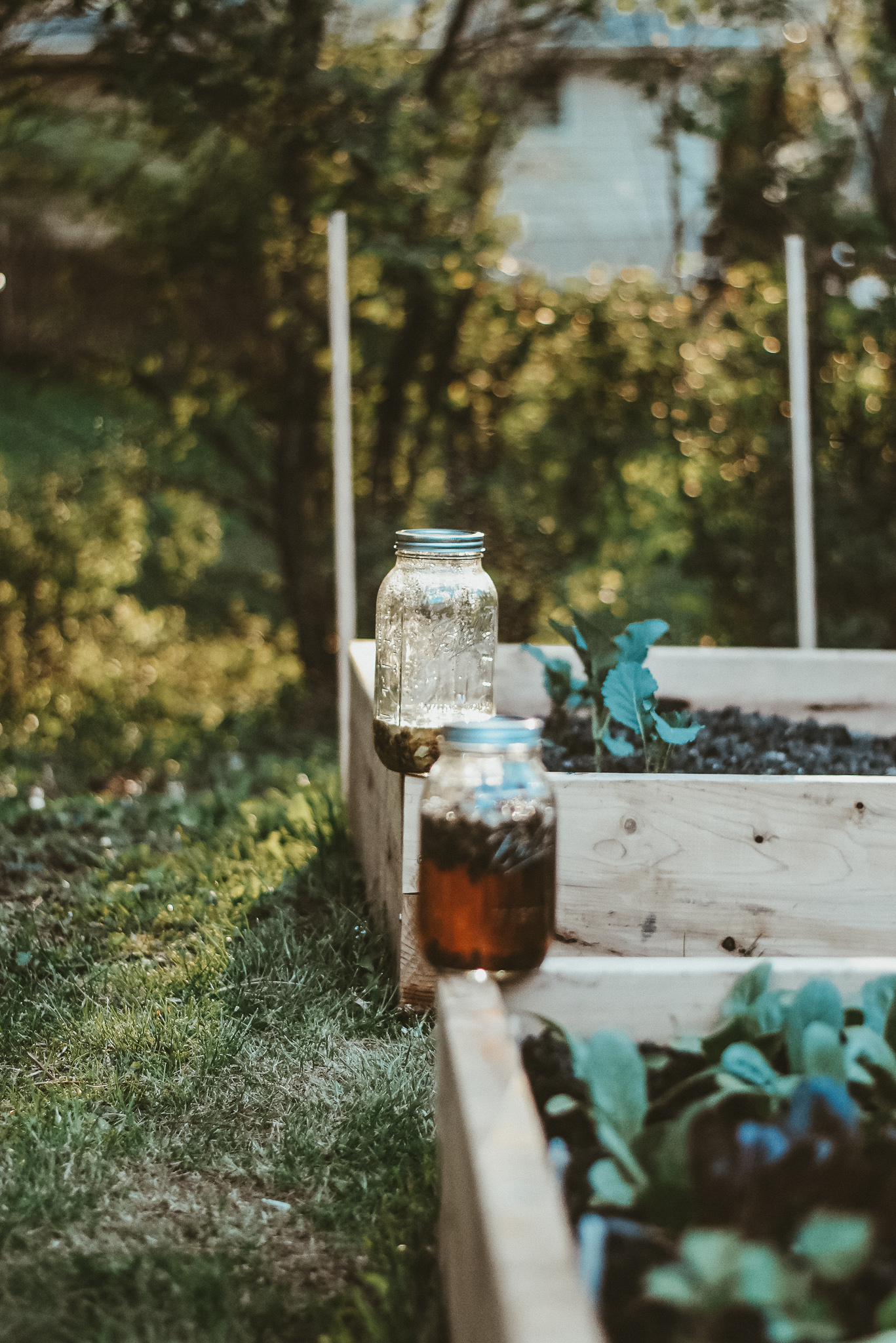 Herbal Academy Courses for family herbalist