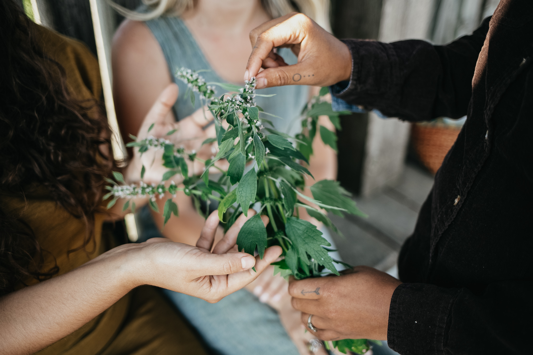 The Professional Herbalist Path Package is an online, self-paced herbalism course designed to prepare students for a career as an herbalist