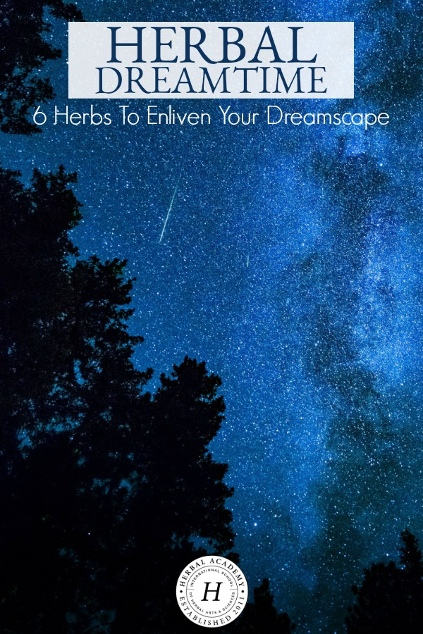 Herbal Dreamtime: 6 Herbs To Enliven Your Dreamspace | Herbal Academy | If you who have difficulty dreaming or remembering your dreams, here are several herbs to draw from to stimulate dreaming at night.